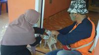 Proses Vaksinasi anti rabies bagi kucing peliharaan (Arfandi Ibrahim/Liputan6.com)