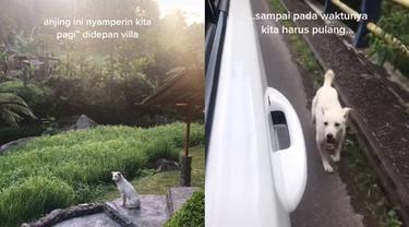 Viral Video Anjing Temani Wisatawan Liburan Ini Enggak Mau Pisah