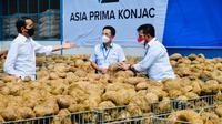 Tanaman porang direkomendasikan Presiden Jokowi sebagai makanan sehat masa depan, apa alasannya? (Sekretariat Presiden)