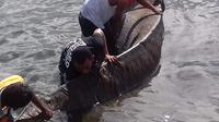 Kulit bangkai hewan terus membesar di Seram, Maluku (Liputan6.com / Abdul Karim)