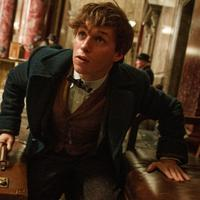 Fantastic Beasts And Where To Find Them. foto: vanity fair