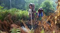 Petugas gabungan berupaya memadamkan kebakaran puluhan hektare kawasan penangkaran gajah di Taman Nasional Tesso Nilo (TNTN) Kabupaten Pelalawan, Riau. (Liputan6.com/M Syukur)