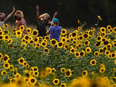 Para gadis berfoto di ladang bunga matahari di Grinter Farms, dekat Lawrence, Kansas pada 7 September 2020. Ladang seluas 26 acre yang ditanam setiap tahunnya oleh keluarga Grinter itu menarik ribuan pengunjung selama akhir musim panas saat mekarnya bunga matahari. (AP Photo/Charlie Riedel)