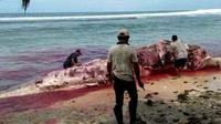 Bangkai Paus Sperma sepanjang 12,6 meter terdampar di Pantai Kaur Provinsi Bengkulu (Liputan6.com/Yuliardi Hardjo)