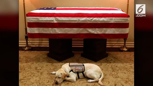 Sully, sosok anjing peliharaan Georger HW Bush jadi sorotan warganet setelah bersimpuh murung di hadapan jenazah mantan Presiden AS tersebut.
