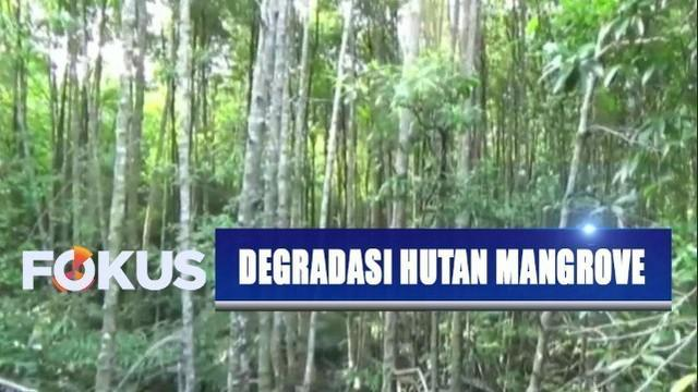 Rencana pemindahan ibu kota, pemerhati lingkungan khawatirkan ada degradasi hutan mangrove di Balikpapan, Kalimantan Timur.