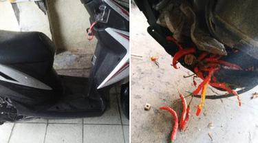motor mogok karena ulah tikus