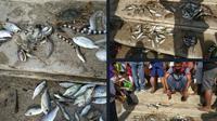 Biota laut mati mendadak ditemukan di pesisir pantai Desa Lolonluan, Kecamatan Tanimbar Utara, Kabupaten Kepulauan Tanimbar (KKT). (Liputan6.com/ Istimewa)