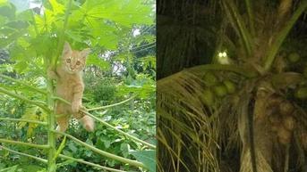 6 Potret Kucing Panjat Pohon Ini Ekspresi Lucu Banget