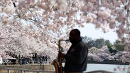 Musisi bermain ketika pengunjung berjalan di dekat pohon sakura yang mekar penuh di Tidal Basin, Washington, Minggu (22/3/2020). Puncak mekar bunga sakura tahun ini disebut-sebut yang paling cepat sejak 2012 tersebut  bertepatan dengan wabah pandemi virus corona. (AP/Jose Luis Magana)