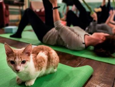 Yoga Bersama Kucing
