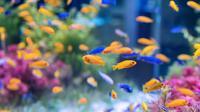 Jenis Ikan Hias Kecil (sumber: freepik)