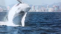Serunya melihat langsung paus di Gold Coast Australia.