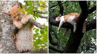 Pose kucing (Sumber: Boredpanda)
