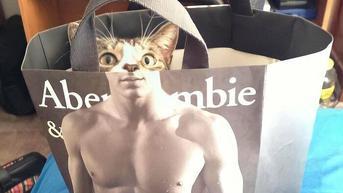 10 Tingkah Nyeleneh Kucing, Bikin Enggak Habis Pikir
