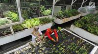 Peneliti tanaman Begonia Hartutiningsih melakukan proses adaptasi Begonia di Kebun Raya, Bogor, Senin (25/2). Kebun Raya Bogor telah mengkoleksi 134 jenis Begonia yang diperoleh dari hasil ekplorasi hutan di Indonesia. (Merdeka.com/Arie Basuki)