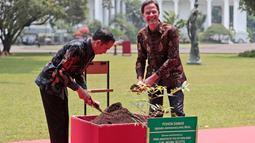 Presiden Joko Widodo atau Jokowi (kiri) bersama PM Belanda Mark Rutte menanam pohon damar disela pertemuan di Istana Bogor, Jawa Barat, Senin (7/10/19). Pertemuan itu membahas kerja sama strategis antara Indonesia dan Belanda kedepan berdasarkan prinsip kemitraan komprehensif. (AP/Dita Alangkara)