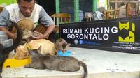Mohamad Djafar, warga Kota Gorontalo yang mendirikan Panti Asuhan Kucing Terlantar (Foto: Arfandi Ibrahim/Liputan6.com)