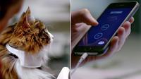 Kerah yang diberi nama 'Catterbox' ini memiliki sensor digital yang akan mendeteksi suara kucing dengan menggunakan program khusus.
