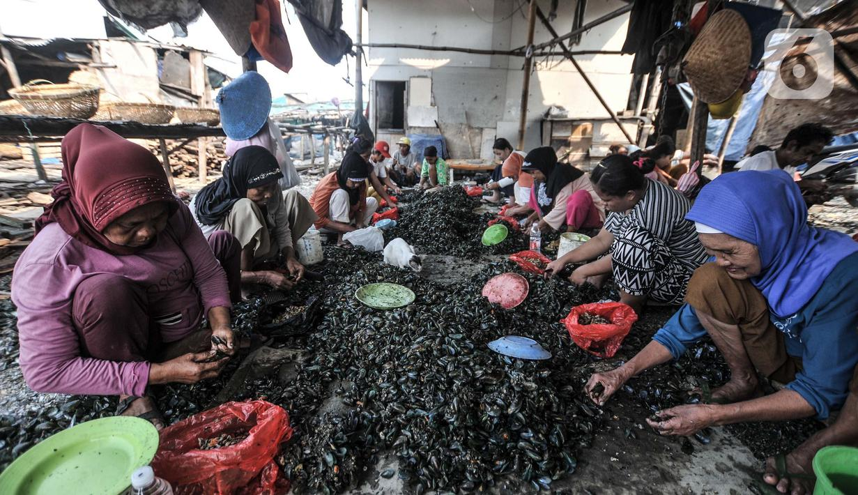 Pekerja saat mengupas kerang hijau di Kalibaru, Cilincing, Jakarta Utara, Minggu (13/6/2021). Keberadaan Kampung Kerang Hijau di Cilincing yang eksis sejak puluhan tahun lalu ini tak lepas dari kelihaian para pengupas kerang yang rata-rata digeluti oleh kaum perempuan. (merdeka.com/Iqbal S. Nugroho)