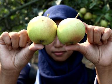 Pengunjung menunjukkan buah apel di salah satu perkebunan kawasan Batu, Malang, Jawa Timur, Rabu (25/9/2019). Apel Malang dihargai Rp 25 ribu hingga Rp 30 ribu per kilogramnya. (Liputan6.com/JohanTallo)