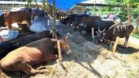 Pemkot Surabaya akan mengawasi pembuangan limbah hewan kurban sembarangan. (Foto: Liputan6.com/Dian Kurniawan)