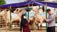 Lesty Kejora dan Rizky Billar beli sapi kurban (Sumber: Instagram/rizkybillar)