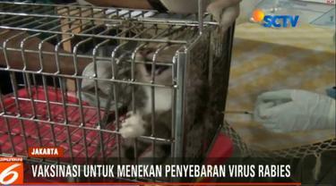 Selain memberi vaksin, petugas juga mengebiri kucing jantan untuk menekan populasi kucing liar.