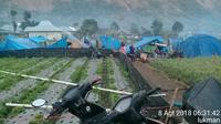 Posko pengungsian di tengah sawah di Desa Sembalun, Lombok (Lukman)