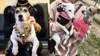 6 Gaya Glamor Anjing Seleb Hollywood (sumber: instagram/@normieandbambijenner/@donatella_versace)