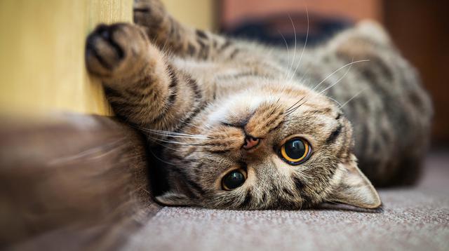 Ilustrasi kucing bermain. Credit: Shutterstock.