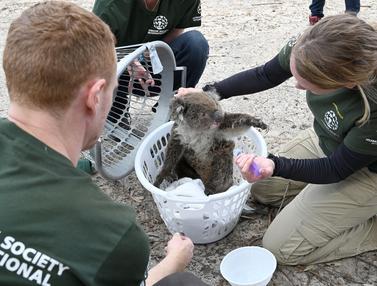 [CERITA] Misi Penyelamatan Koala