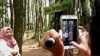 Bagi Anda pecinta nuansa alam ada baiknya mengunjungi hutan pinus di lereng Gunung Merbabu, Magelang, Jawa Tengah.