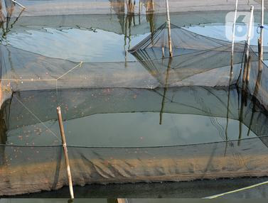 petani ikan hias terdampak covid-19