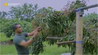 Cerita Prajurit TNI Usai Diamputasi Justru Sukses Jadi Petani. foto: Youtube 'Kementerian Pertanian RI'