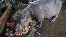 Fatima, seekor bayi kuda nil berumur dua setengah tahun memakan buah di sebuah kolam di Kebun Binatang Masaya, Nikaragua (6/9/2019). Kebun Binatang Nasional Nikaragua adalah rumah bagi setidaknya 900 hewan dari berbagai spesies. (AFP Photo/Inti Ocon)