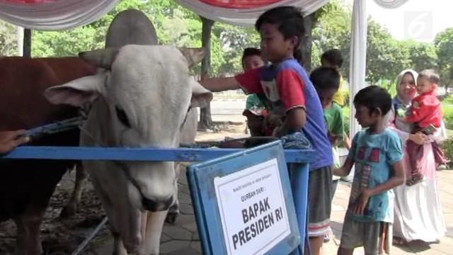 Presiden Joko Widodo menyumbangkan sapi jenis peranakan ongole seberat 1 ton 50 kg yang akan dikurbankan ke Masjid Al Akbar, Surabaya.