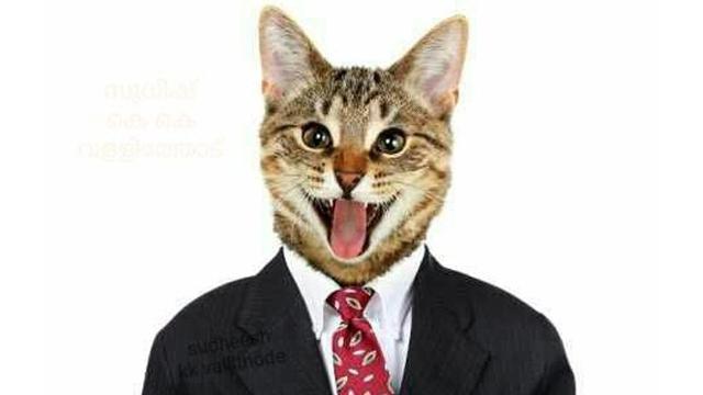 Posting Foto Kucing Akun Facebook Pria Ini Diblokir Tekno