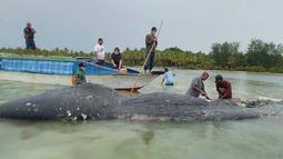 Foto tak bertanggal, peneliti mengumpulkan sampel bangkai paus sperma di perairan Wakatobi, Sulawesi Tenggara. Paus dengan panjang 9,5 meter itu ditemukan dalam kondisi sudah mati dan mulai membusuk. (Muhammad Irpan Sejati Tassakka, AKKP Wakatobi via AP)