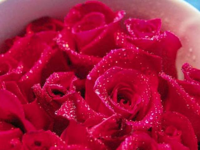 6 Makna Yang Tersimpan Di Setiap Warna Bunga Mawar Health