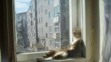 10 Pose Kucing Tidur di Tempat Tak Semestinya Ini Bikin Heran