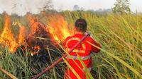 Tim Manggala Agni Daops Tinanggea Konawe Selatan, saat memadamkan api di wilayah pemukiman warga. (Akbar Fua/Liputan6.com)