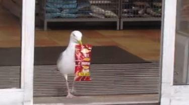 Aksi Kocak Burung Camar Curi Makanan di Supermarket