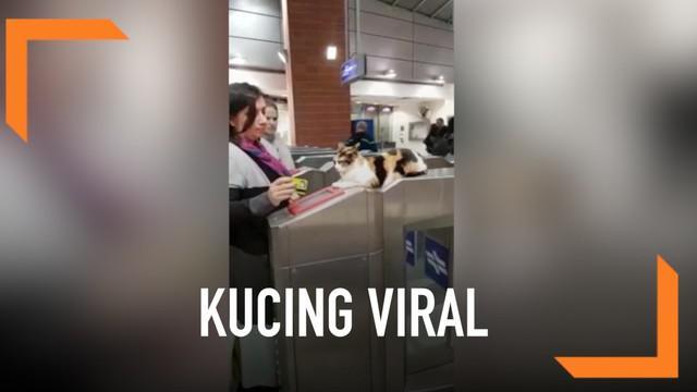 Seekor kucing bernama Mitsy viral karena tingkahnya yang tak biasa. Ia duduk di pintu masuk stasiun kereta seperti petugas.