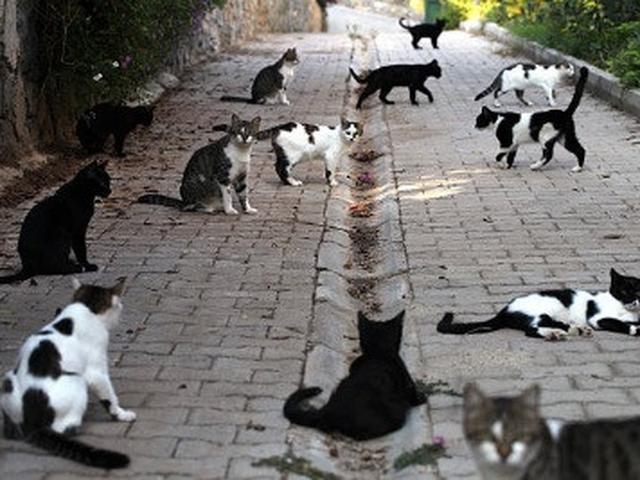 Tinggal Di Jalanan Hingga Museum Kota Ini Memiliki Jumlah Kucing Terbanyak Global Liputan6 Com