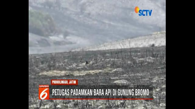 Banyak savana yang rusak dan berubah menjadi tandus akibat kebakaran di kawasan Gunung Bromo.