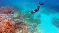 Pesona Bawah Laut Minahasa Tenggara (Raiyani Muharramah)
