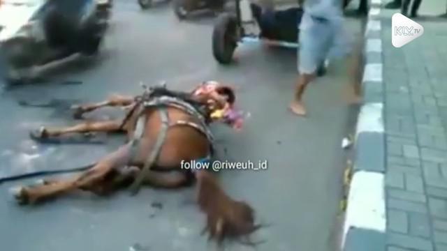 Akibat tersandung sesuatu di jalan, seekor kuda pingsan di jalanan hingga harus digotong warga.