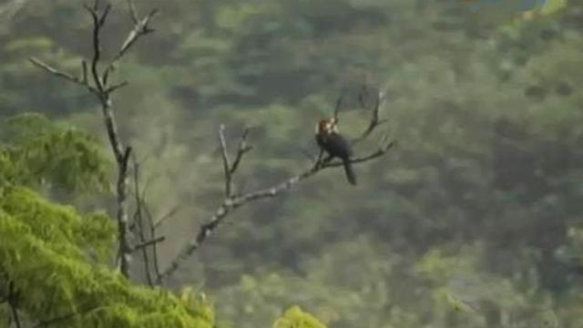 Tegakan pohon, air berlimpah dan burung adalah tiga hal yang tak terpisah.