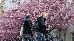 Dua wanita berjalan melewati sebuah jalan yang dipenuhi dengan bunga sakura bermekaran di Berlin tengah, Jerman pada 23 April 2019. Pohon sakura di Jerman memang lazim ditanam di ruang-ruang terbuka hijau, selain sebagai peneduh juga untuk mempercantik kota. (John MACDOUGALL / AFP)